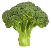 Fresh broccoli isolated Stock Image