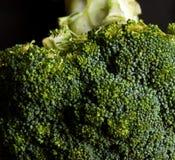 Fresh broccoli. Fresh raw broccoli against black background Stock Images