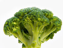 Fresh broccoli solated on a white background Royalty Free Stock Images