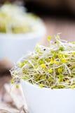 Fresh Broccoli Sprouts Stock Photo