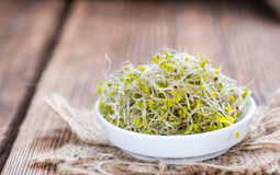 Fresh Broccoli Sprouts Stock Image