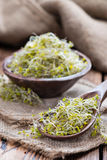 Fresh Broccoli Sprouts Royalty Free Stock Photography
