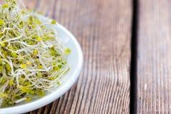 Fresh Broccoli Sprouts Stock Photos