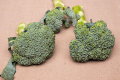Fresh broccoli Stock Images