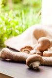 Fresh brown Agaricus mushrooms Stock Images