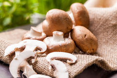 Fresh brown Agaricus mushrooms Royalty Free Stock Images