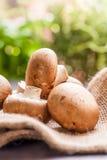 Fresh brown Agaricus mushrooms Royalty Free Stock Photos