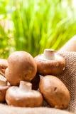 Fresh brown Agaricus mushrooms Stock Photography