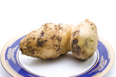 Fresh Brown Big Potato Stock Photo