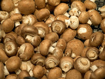 Fresh brown champignon mushroom Stock Photo