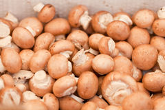 Fresh brown champignons on market outdoor Stock Image