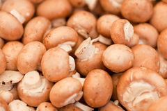 Fresh brown champignons on market outdoor Royalty Free Stock Images