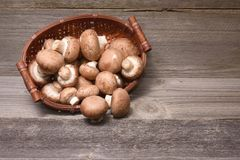 Fresh brown champignons Royalty Free Stock Images