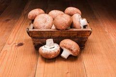 Fresh brown champignons Stock Photos