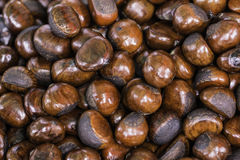 Fresh brown Chestnuts Royalty Free Stock Photography