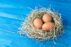 Fresh brown chicken eggs in hay nest on blue wooden background. Concept of organic eggs, free space for text or other elements.  stock photo