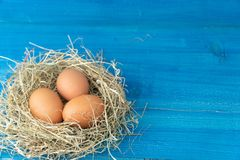 Fresh brown chicken eggs in hay nest on blue wooden background. Concept of organic eggs, free space for text or other elements royalty free stock photography