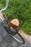 Fresh brown coconut in a bicycle basket Royalty Free Stock Images