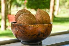 Fresh brown coconuts served in the wooden plate. At the outdoor bar Stock Photography