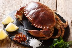 Fresh Brown Crab Cancer Pagarus With Spices For Cooking Close- Royalty Free Stock Photo