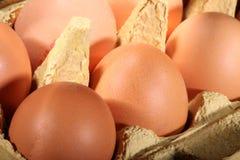 Fresh brown eggs Royalty Free Stock Photos