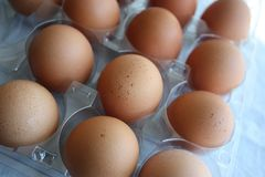 Fresh brown eggs in a carton Royalty Free Stock Photography