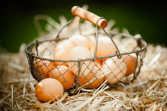 Fresh brown eggs in a metallic basket on straw Royalty Free Stock Image