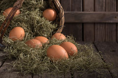 Fresh Brown Eggs Royalty Free Stock Photos