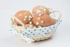 Fresh brown eggs Stock Photography
