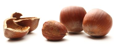 Fresh brown hazelnut Royalty Free Stock Photo