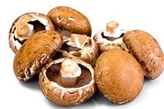Fresh Brown Mushrooms Isolated on White Background. Studio Photo Royalty Free Stock Images