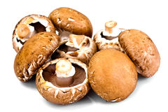 Fresh Brown Mushrooms Isolated on White Background. Studio Photo Stock Images