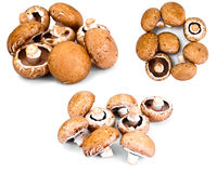 Fresh Brown Mushrooms Set Isolated on White Background Royalty Free Stock Images