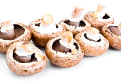 Fresh Brown Mushrooms  on White Background. Studio Photo Stock Photos