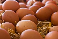 Fresh brown rustic natural chicken eggs on straw Royalty Free Stock Photo