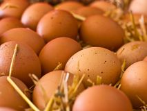 Fresh brown rustic natural chicken eggs on straw Stock Image