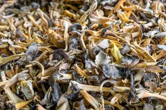Fresh, brown wild mushrooms. In the market royalty free stock photography