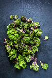 Fresh brussel and kale sprouts flower Royalty Free Stock Image