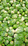 Fresh brussel sprouts Royalty Free Stock Photography