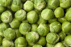Fresh Brussels sprouts. Full frame Stock Image