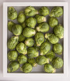 Fresh Brussels sprouts in a box of water Royalty Free Stock Images