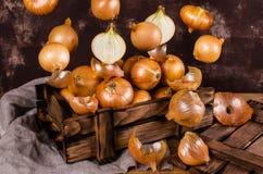 Fresh  bulb onions Stock Photo