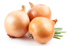 Fresh bulbs of onion Stock Image