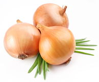 Fresh bulbs of onion Royalty Free Stock Images