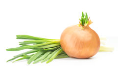 Fresh bulbs of onion on a white background and green onions.  Royalty Free Stock Image
