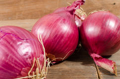 Fresh bulbs of red onions Stock Photography