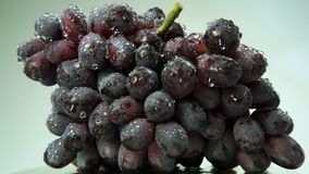 Fresh bunch of black wine grapes with water drops stock video