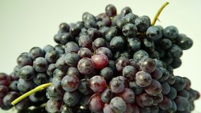 Fresh bunch of black wine grapes with water drops stock video footage