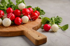 Fresh bunch of colorful radish on grey concrete background. Selective focus, copy space Stock Photography