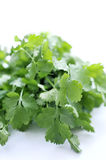 Fresh Bunch of Coriander Stock Photos
